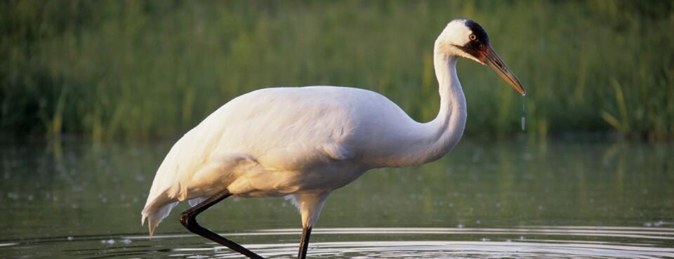 Endangered Species 'Habitat' Proposal Raises Climate Questions