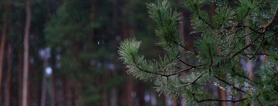 House Squabble Over Trillion Trees Shows Partisan Climate Divide