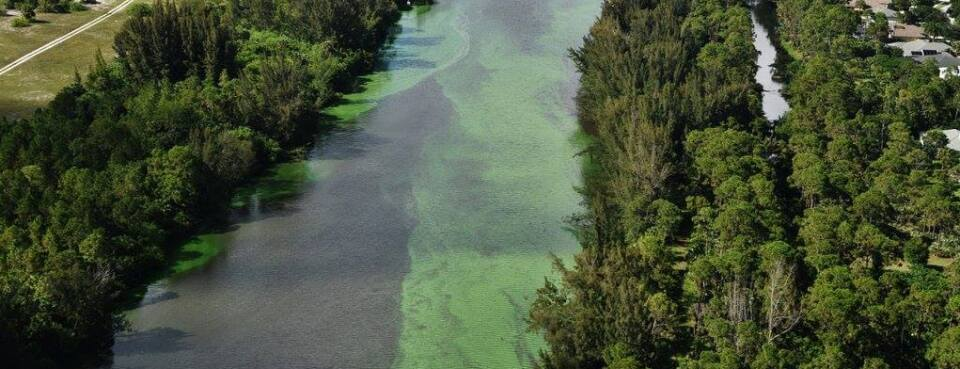 Florida Algal Bloom