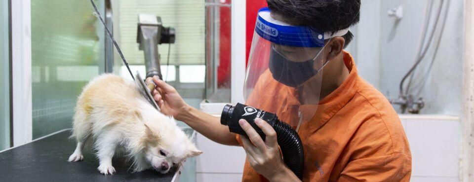 Photo of a dog groomer.