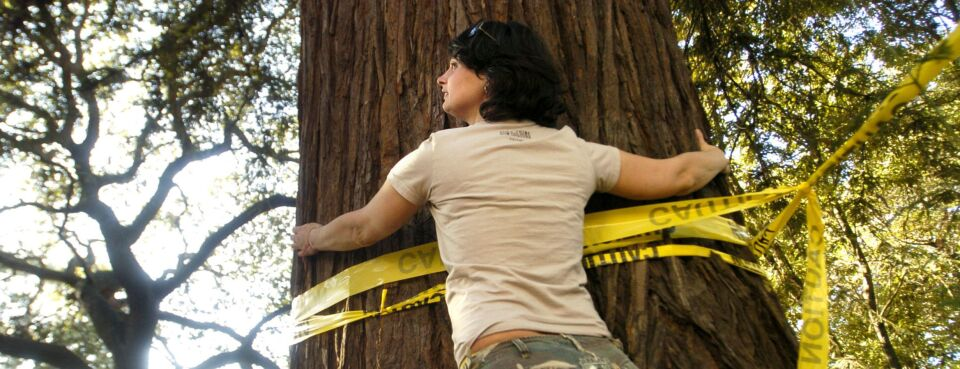 Photo of an activist hugging a redwood tree on the campus of the University of California, Berkeley.