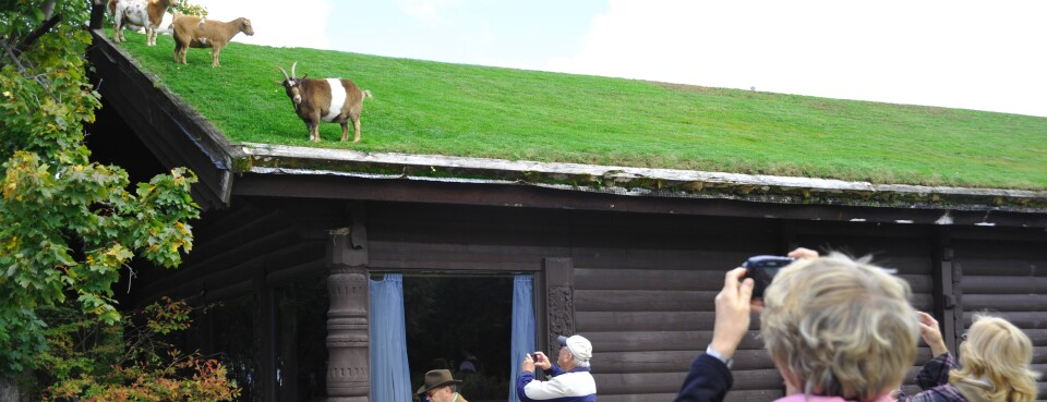 Attorney's Challenge of Goats-on-Roof Trademark Deemed Frivolous