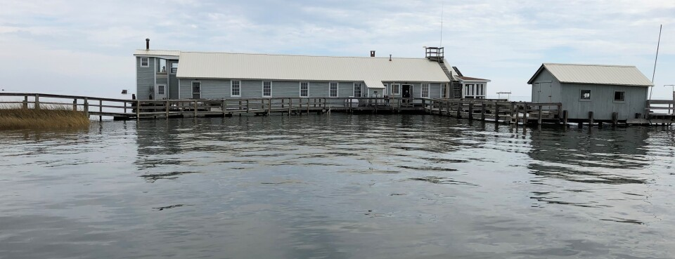 Rising Seas Force Conservation Group Off Chesapeake Bay Island