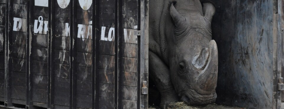 World's Last Male Northern White Rhino Dies in Kenyan Reserve