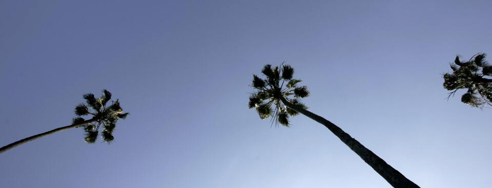Palm trees rise above a street in Beverly Hills.