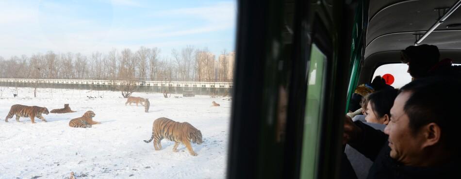 Coronavirus Prompts China to Change Environment Law on Wildlife