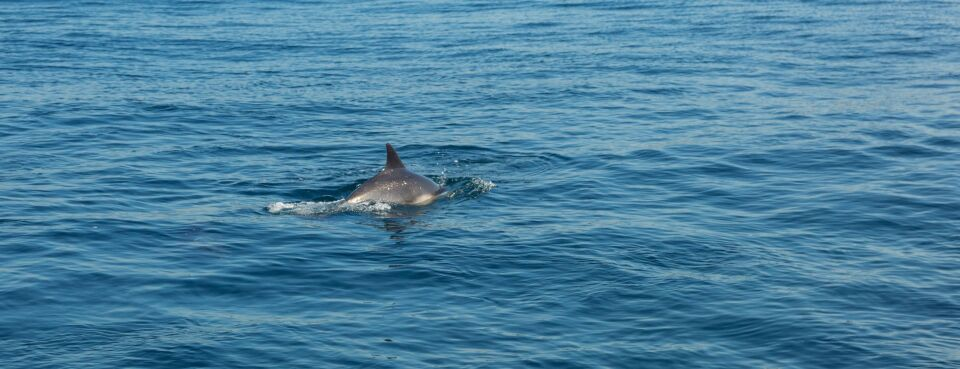 U.S. to Reconsider New Zealand Seafood Ban to Protect Dolphin