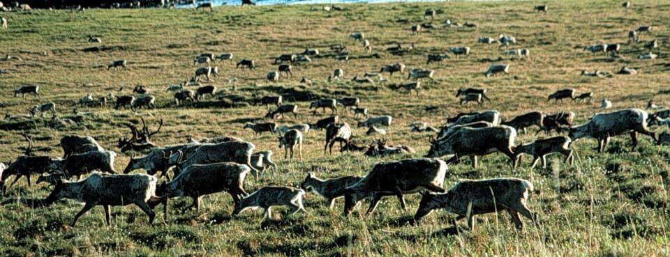 House Panel Advances Bill to Curb Pesticides on Wildlife Refuges (1)